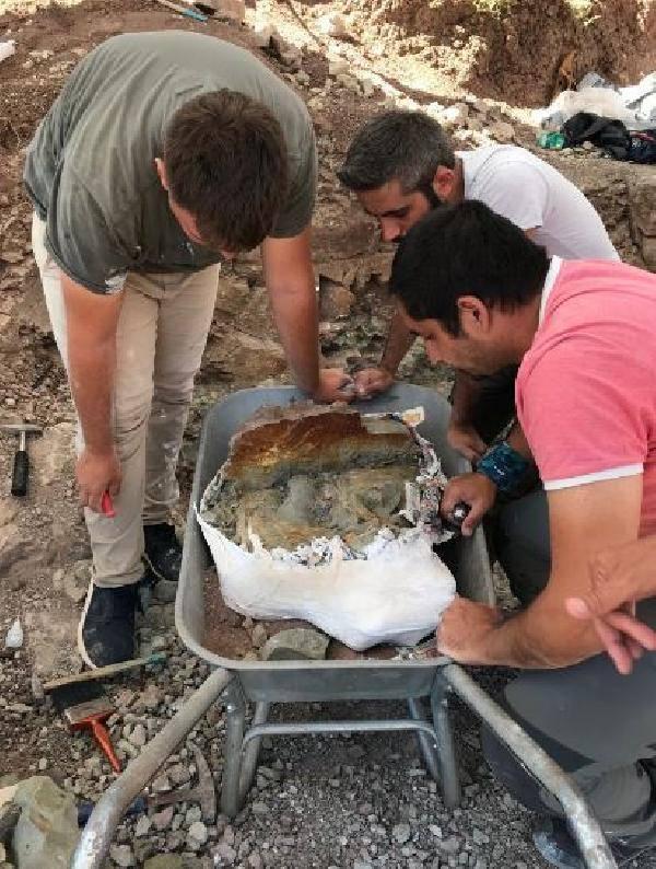 Çankırı'da bulundu! Tam 8,5 milyon yıl öncesi...