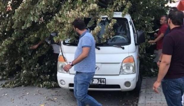 Ağaç kamyonetin üzerine devrildi