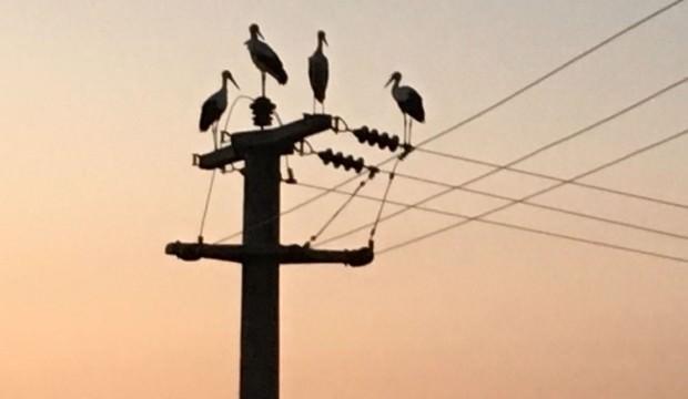 Leylek göçü 10 köyü elektriksiz bıraktı