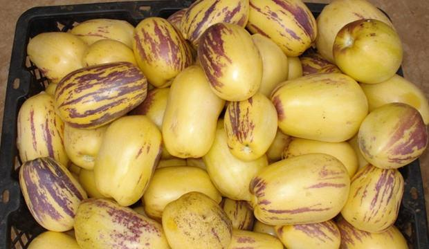 Pepino meyvesinin faydası nelerdir? Pepino nasıl tüketilmelidir?