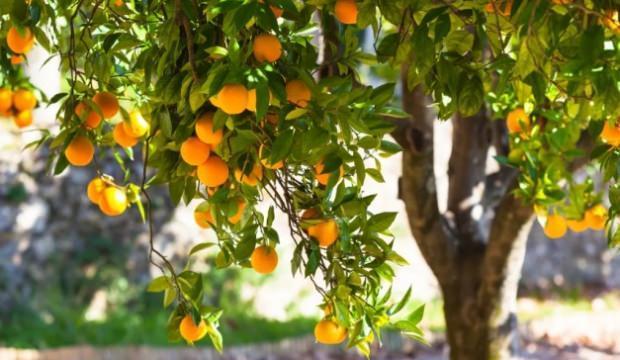 Frutaryen beslenme nedir?