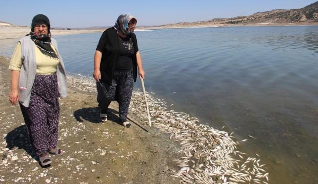 Balık ve kerevitlerin ölüm nedeni belli oldu
