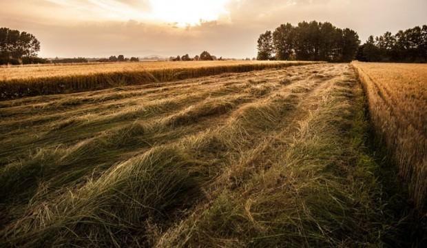 Karar çıktı: Buralarda arazileri olanlar dikkat!