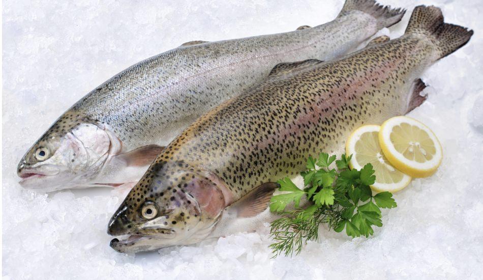 Balığın taze olup olmadığı nasıl anlaşılır?