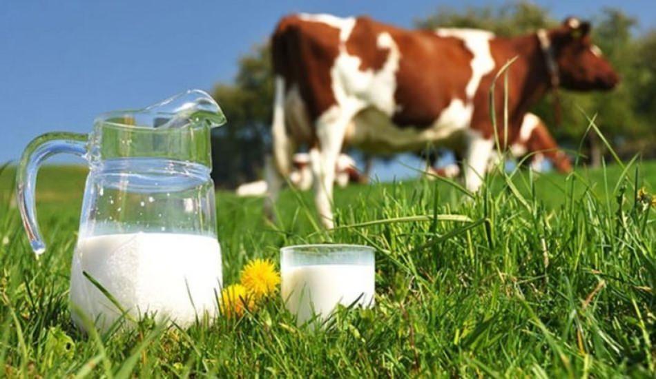 Bebeklere inek sütü verilmeli mi?