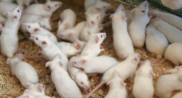 rüyada fare görmenin anlamı