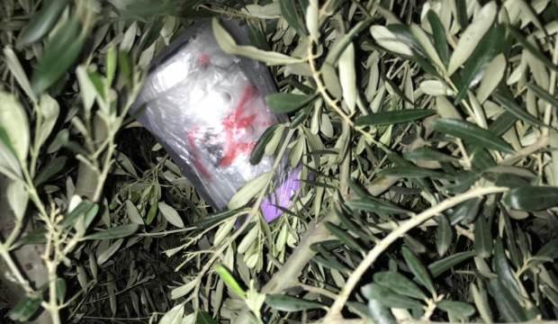 Zeytin ağacına gizlenmiş halde bulundu
