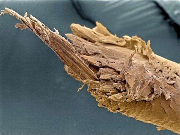 Kırılan saçın mikroskop görünümü
