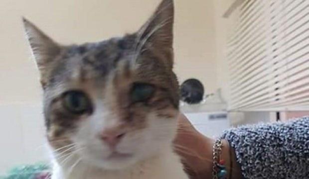 Antalya'da tüfekle vurulan kedi tedavi edildi