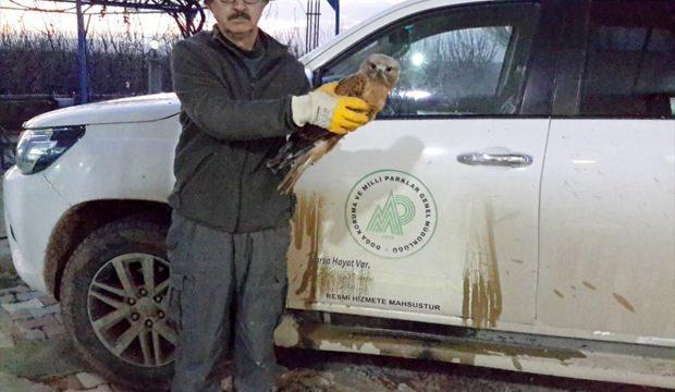 Konya'da yaralı şahin koruma altına alındı