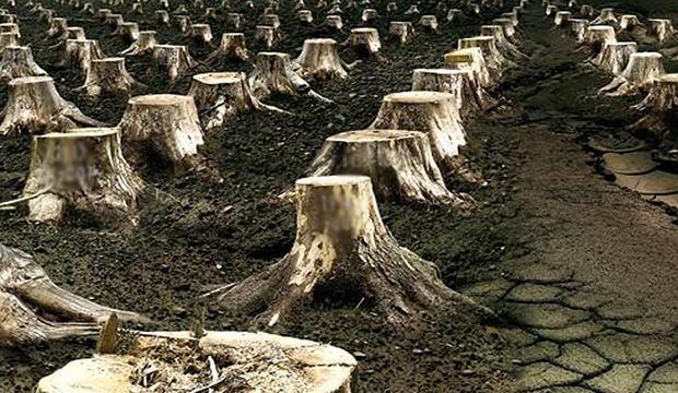 Izinsiz Ağaç Kesmenin Cezası Nedir Ağaç Kesenler Nereye şikayet