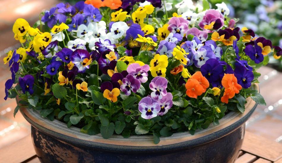 Kışa dayanaklı çiçekler hangileridir?