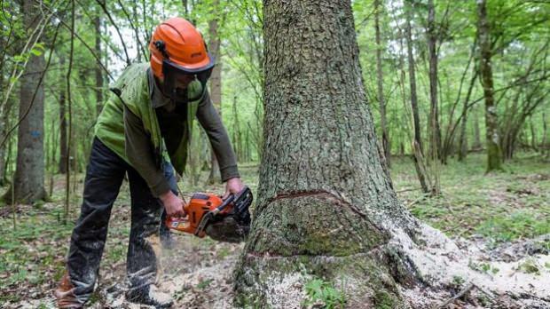 2019 İzinsiz Ağaç Kesmenin Cezası