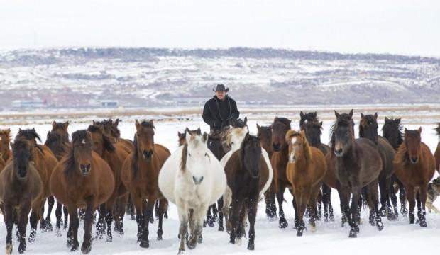'Kovboy Ali Dayı'nın 300 atı var