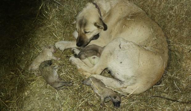 Yavru kangallar dondurucu soğuğa dayanamadı