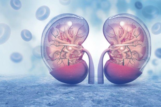 organ nakli hakkında merak edilenler