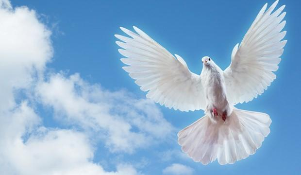 Rüyada Beyaz Kuş