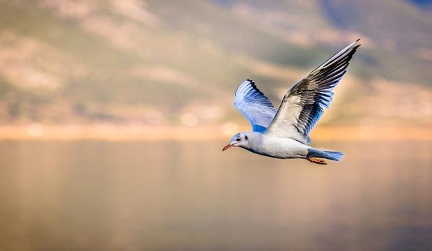 Rüyada kuş görmek nasıl yorumlanır? Rüyada kuşun anlamı iyi mi kötü mü?