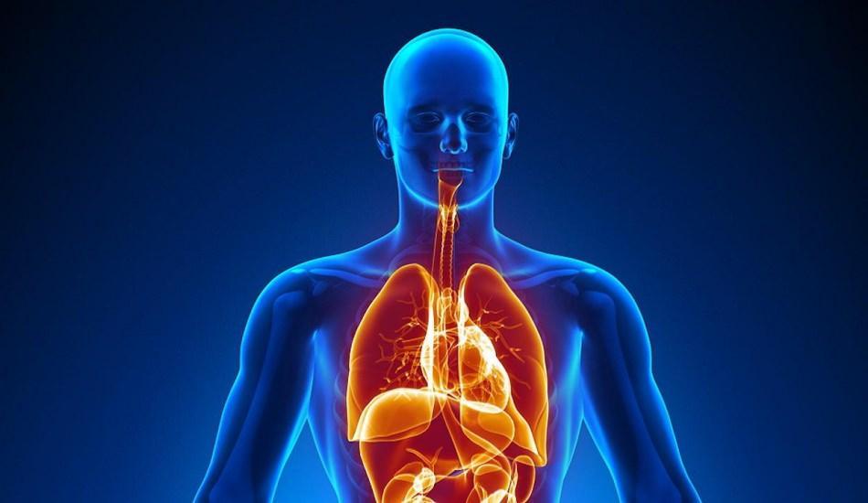 İnsan sağlık açısından hangi iç organlara ihtiyaç duymaz?