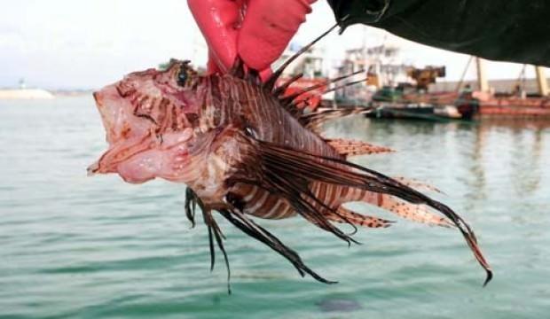Balıkçılar şaştı kaldı! Mersin'de görüldü