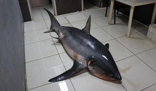 3 günde ikinci dev köpek balığı