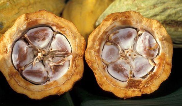 Kakao Yağı Faydaları
