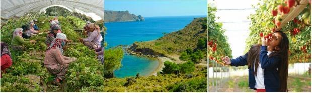 Yeşilırmak / Kıbrıs