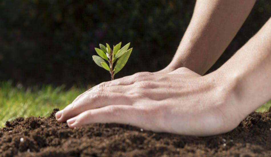 Tohum ne zaman ekilir?