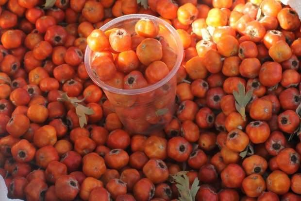 alıç meyvesinin bilinmeyen faydaları