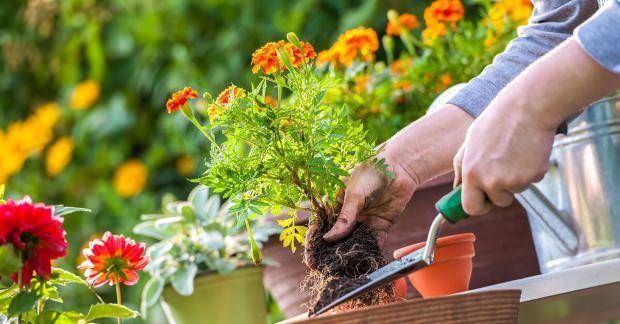 Bitki bakımı önerileri