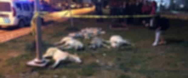 öldürülen köpekler