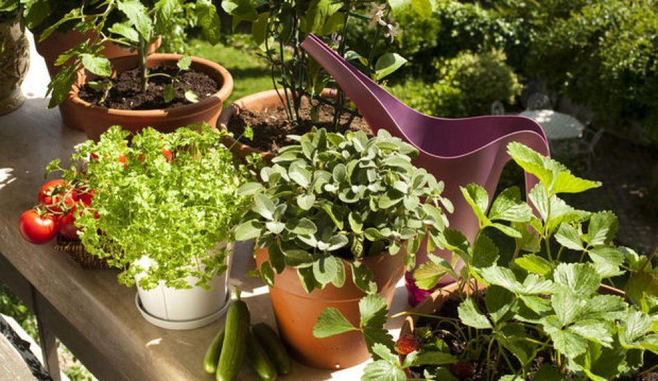 Bitki yetiştirme teknikleri