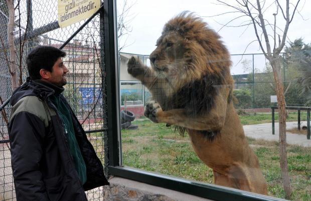 Samsun Hayvanat Bahçesi