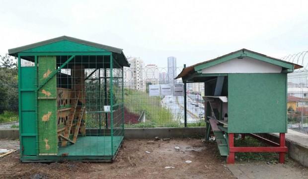 Başakşehir'in kedileri 'ev'leniyor