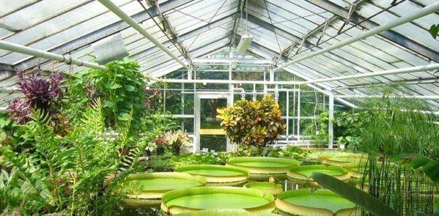 İstanbul Üniversitesi Alfred Heilbronn Botanik Bahçesi