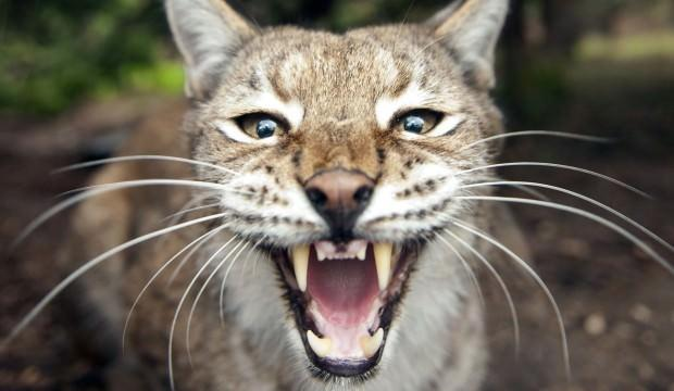 Koca ülkeden tepki çekecek karar: 2 milyon kediyi sosisle öldüreceğiz