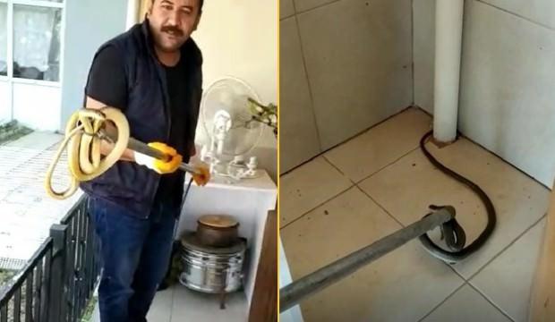 Eve giren 2 metrelik yılan hayatının şokunu yaşattı