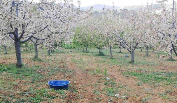 Çiftçilerden böceklere 'mavi leğenli' önlem