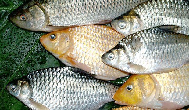 Rüyada Canlı Balık Görmek