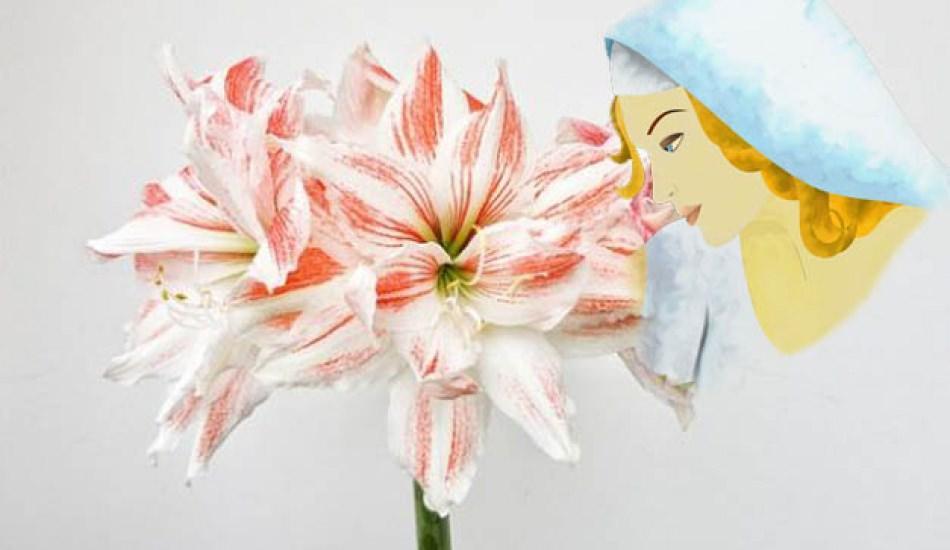 Güzel hatun çiçeği nedir? Güzel hatun çiçeği nasıl yetiştirilir?