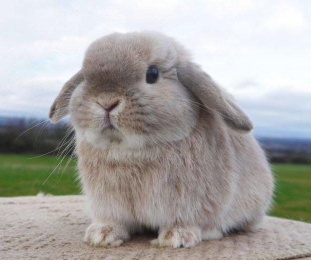 Tavşan bakımı ve tuvalet eğitimi