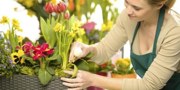 saksı çiçeklenmesi nasıl önlenir