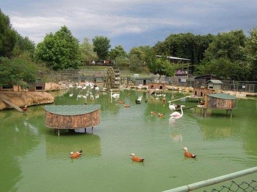 Beykoz Polonezköy- Hayvanat Bahçesi