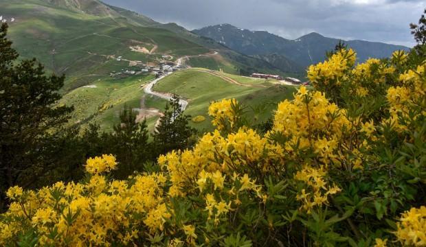 Zigana Dağı'nda renk cümbüşü!