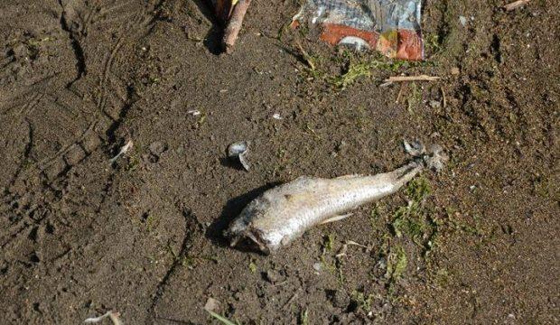 Kıyıya vuran ölü balıklar, vatandaşları tedirgin etti