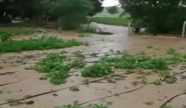 Şiddetli yağış ekili alanlara zarar verdi