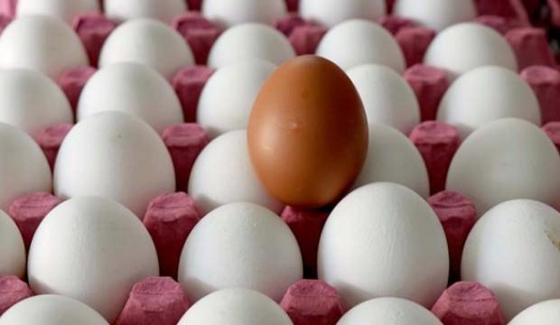 Tavuk yumurtasi üretimi geçen yıla göre arttı