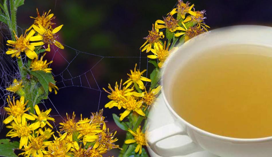 Altınbaşak otunun faydaları nelerdir? Altınbaşak otu çayı ne işe yarar?