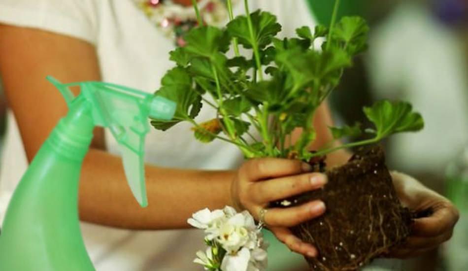 Çiçeklere zarar vermeyen doğal böcek ilacı nasıl yapılır?