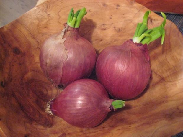Filizlenmiş soğan yenir mi?